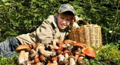 Традиции нашей семьи. Как мы ходим за грибами