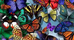 Краткое сообщение о бабочках (2 класс, окружающий мир)