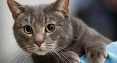 Доклад про кошек (для 2 класса по Окружающему миру)
