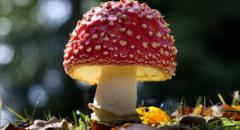 Несъедобные грибы (2 класс, окружающий мир)